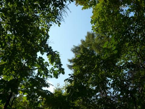 登山道上空に広がる青空.JPG