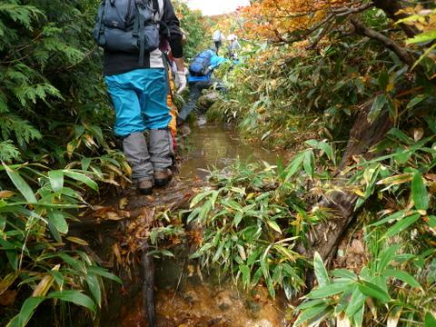 雨上がりの登山道-1.JPG